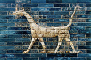 Artifact Framed Prints - Babylon Ishtar Gate 600 B.c Framed Print by Granger