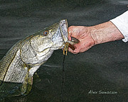 Bonefish Drawings Prints - Back Bay Snook Print by Alex Suescun