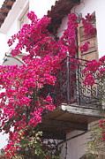 Yvonne Ayoub - Balcony in Bloom
