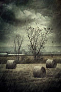 Sandra Cunningham - Bales of hay in field on a rainy day