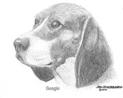 Dogs Drawings - Beagle by Jim Hubbard