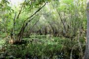 Barbara Bowen - Big Cypress Preserve