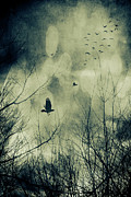 Branches Posters - Birds in flight against a dark sky Poster by Sandra Cunningham