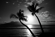 Coconut Prints - Black and White tropical Print by Pierre Leclerc