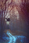Sandra Cunningham - Black bird flying by in forest
