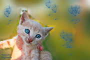 Augusta Stylianou - Blue Eyes Kitten