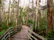Barbara Bowen - Boardwalk through Corkscrew Swamp