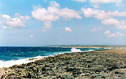 Tropical Photographs Photos - Bonaire Shore 3 by C Sitton