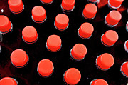 Bottle Cap Photo Posters - Bottles red caps Poster by Sami Sarkis