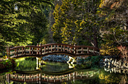 Matt Dobson - Bridge in Japanese Gardens - Hatley...