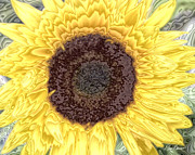 Diana Haronis - Brilliant Sunflower