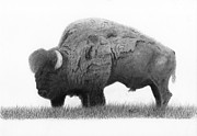 American Bison Drawings Prints - Buffalo 3 Print by EJ John Baldwin