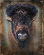 Bison Digital Art - Buffalo  named Maka by Judy Neill