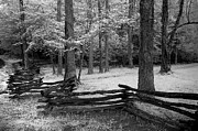 Split Rail Fence Prints - Carter Shields Fence and Dogwoods Print by Tony Gayhart