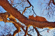 Frisky Photo Posters - Cat on a branch Poster by Gregory Dean