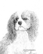 Jim Hubbard Metal Prints - Cavalier KIng Charles Spaniel Metal Print by Jim Hubbard