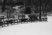 Park Benches Framed Prints - Central Park NYC Framed Print by Pamela Canzano