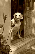 Suzanne Gaff - Charleston Shop Dog in sepia