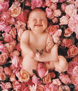 Pink Roses Prints - Cheesecake Print by Anne Geddes