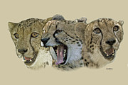 Cheetah Digital Art - Cheetah Faces by Larry Linton