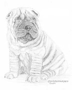Jim Hubbard Prints - Chinese Shar-Pei Print by Jim Hubbard