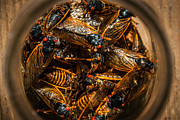 Cicada Photos - Cicada Madness by Gene Hilton