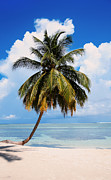 Jenny Rainbow - Coconut Palm Tree on the Beach.Maldives