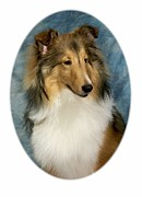 Collie Digital Art Posters - Collie 821 Poster by Larry Matthews