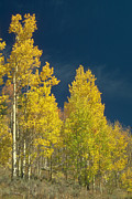 Jerry McElroy - Colorado Aspen Color