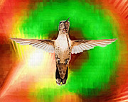 Clarence Alford - Colorful Hummingbird
