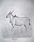 Habitat Drawings Posters - Common Eland Poster by Julia Raddatz