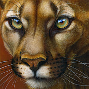 Mountain Painting Posters - Cougar October 2011 Poster by Jurek Zamoyski