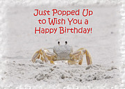 Judy Hall-Folde - Crab Happy Birthday