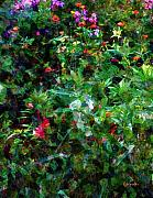 RC DeWinter - Crazyquilt Garden