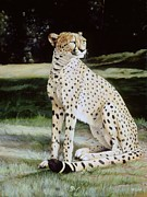 Cheetah Painting Prints - Crowned Regal Print by Steve Goad