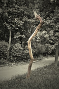 Creative Prints - Dead tree Print by Sumit Mehndiratta