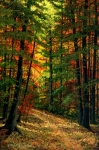 Frank Wilson Prints - Deep In The Forest Print by Frank Wilson