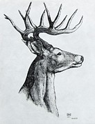 Michael Finney Drawings Posters - Deer Poster by Michael  TMAD Finney