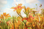 Nature Orange Framed Prints - Digital painting of orange daylilies Framed Print by Sandra Cunningham