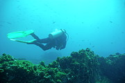 Sami Sarkis - Diver by rocks on ocean floor