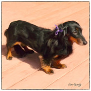 Dachshund Art Digital Art - Dolled Up Dachshund by Susan  Lipschutz