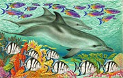 Eel Drawings - Dolphin Reef by Tim McCarthy