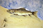 Brown Trout Originals - Down Under Brown by Linda Palmer