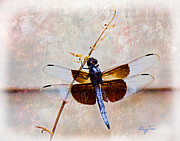 Barry Jones - Dragonfly Clinging