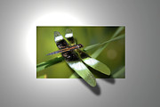 Flying Bugs Framed Prints - Dragonfly Framed Print by Mark Dottle