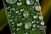 Darcy Michaelchuk - Droplets resting on a Leaf