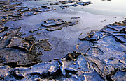 Natural Disasters Art - Dry pond during a drought by Sami Sarkis