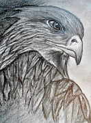 Eagle Drawing Mixed Media - Eagle by Mary DeLawder
