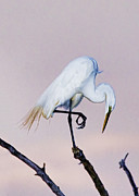 Tom Biegalski - Egret at Twilight