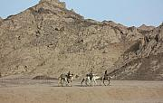 Yvonne Ayoub - Egypt Camels in the Sinai Peninsula...